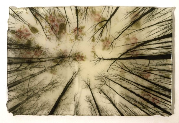 2alberi-resina-30×20-2014-copia